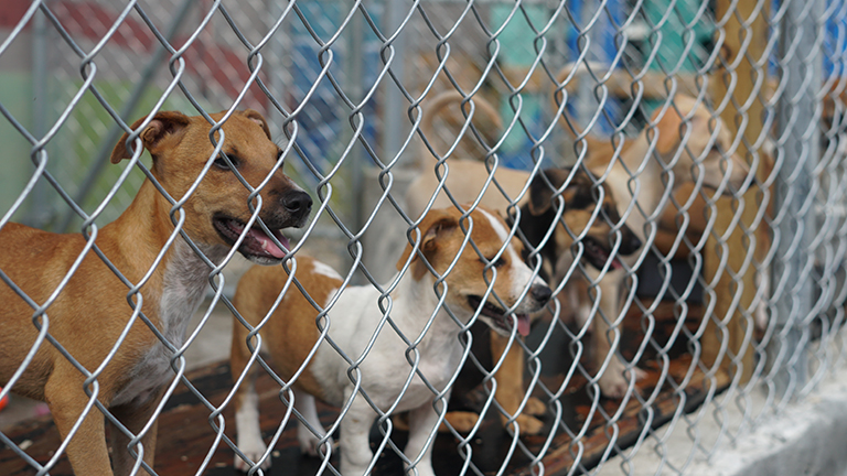 To help as many of the unwanted, abandoned, abused and neglected animals on the island. To educate the public about responsible pet ownership, including the importance of spaying and neutering. To increase compassion expressed to the welfare of animals